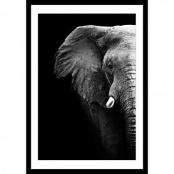 ELEPHANT Affiche encadrée 40x60cm - Eléphant noir & blanc