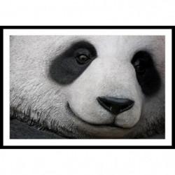PANDA Affiche encadrée 60x40cm - Panda noir & blanc