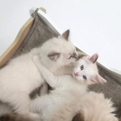 VESPER Meuble Cabana - Blanc et chene - Pour chat