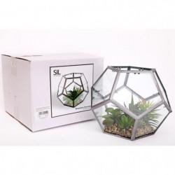 Terrarium a l'hexagone - 23 x 23 x 19 cm