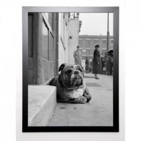 GAY Image encadrée Lazy Bulldog at Camden Town 67x87 cm
